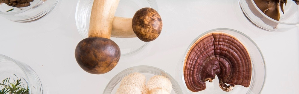 Vital Pilze